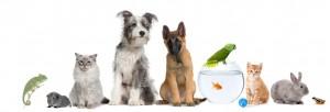 Vetfix Pets