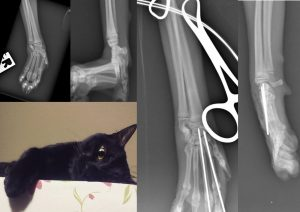 Pancarpal arthrodesis